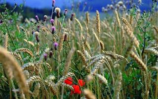 Handlungsempfehlungen für Biodiversität in Standards und Qualitätssiegeln der Lebensmittel-Branche