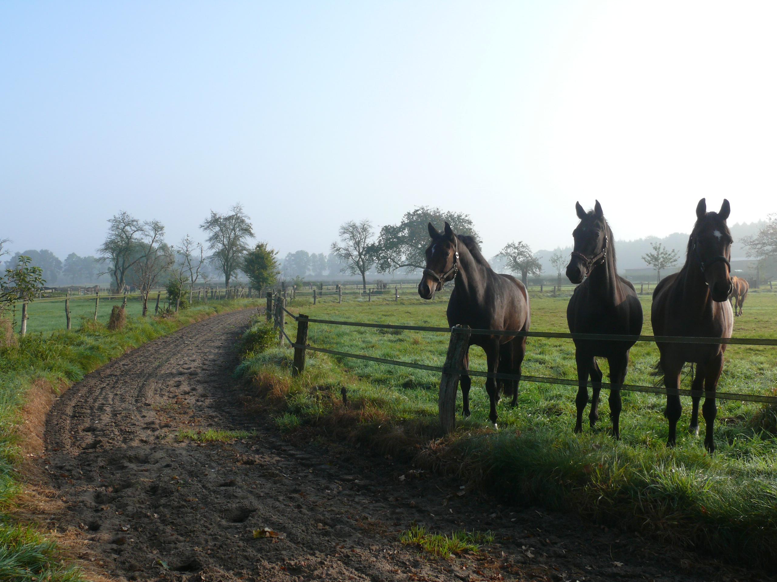 """""""Pferde fördern Vielfalt"""" wird Projekt der UN-Dekade biologische Vielfalt"""